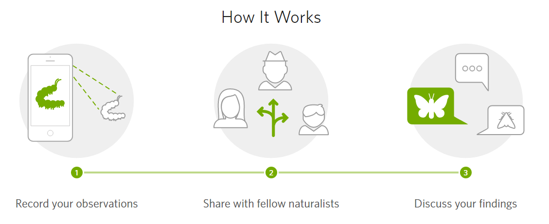 Take the iNaturalist City Challenge April 24-27