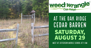 Summer Cedar Barren Cleanup/Weed Wrangle® @ Jefferson Middle School
