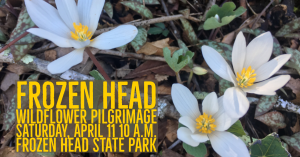 CANCELED!!! - Frozen Head Wildflower Pilgrimage @ Frozen Head State Park