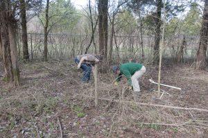 Cedar Barren - Limb Gathering