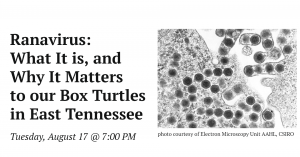 Ranavirus: What It Is, and Why It Matters to Our Box Turtles in East Tennessee
