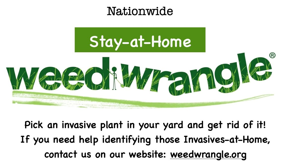 Stay-at-Home Weed Wrangle